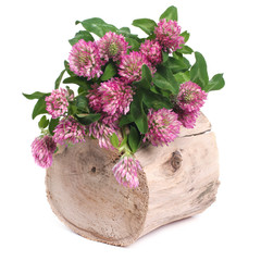 Bouquet of clover on a tree stump isolated on white background