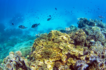Coral reef with school of fish