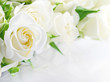 canvas print picture - Closeup of white roses