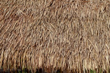 Thatched roof huts.