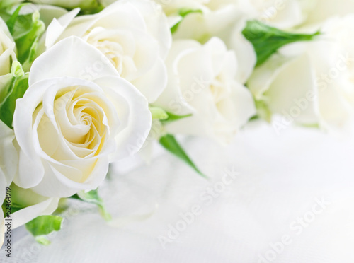 Aluminium Rozen Closeup of white roses