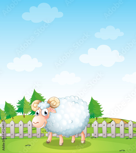 A sheep inside the fence