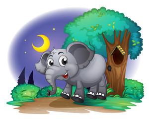 An elephant. in the forest