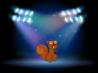 A squirrel at the stage with spotlights