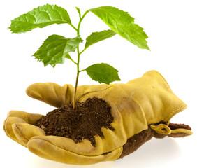 concept environnement, écologie, protection nature