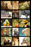 mosaique animaux poster