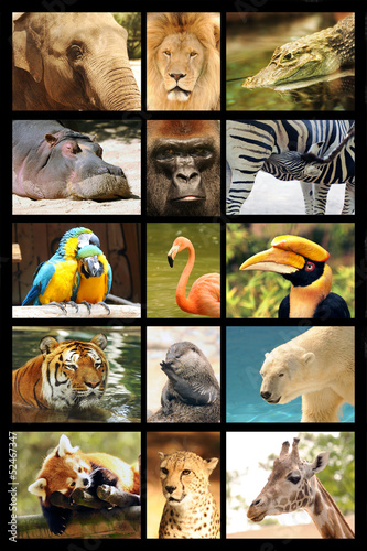 poster of mosaique animaux