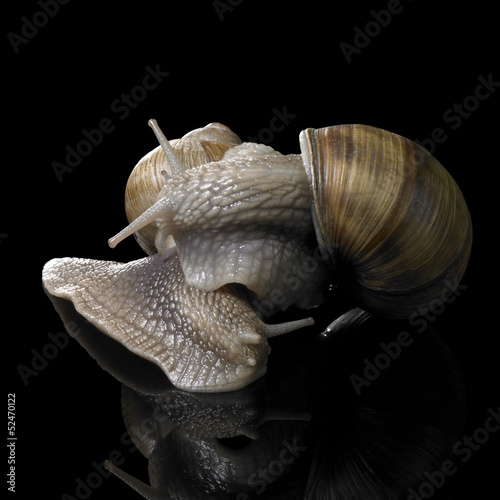 two Grapevine snails