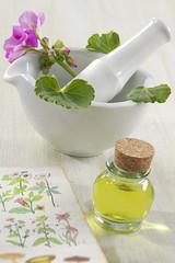 Géranium : Plante médicinale