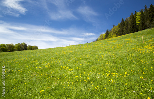 Swiss meadow landscape