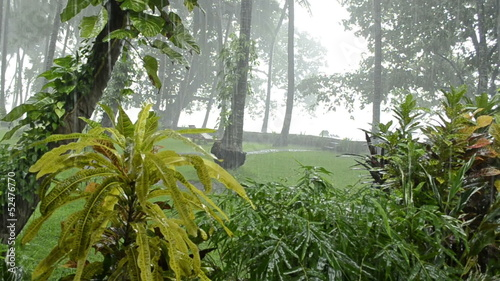 heavy rain in tropical forest. rainy season.