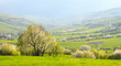 Spring landscape: Flowering slopes of the Carpathian Mountains