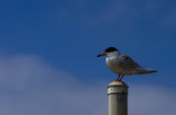 bird on a pole