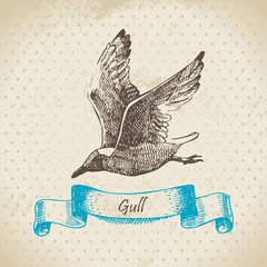 Gull. Hand drawn illustration.