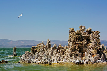 Sea Gull Over Mono Lake