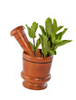 Fresh mint herb in wooden mortar with pestle