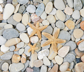 starfishes lie on sea pebble