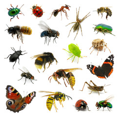 Set of insects