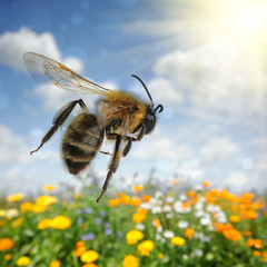 Bee flying over colorful flower field