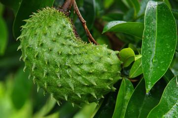 Île de la Réunion - Fruits