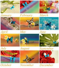 Collage - year with butterflies and flowers