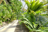 Tropical Plants in a greenhouse at botanic garden