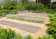 Vegetable Garden in early spring