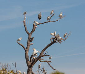 The Bird Tree