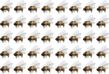sciame d'api