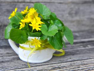 Bouquet of Lesser Celandine (Ranunculus ficaria)