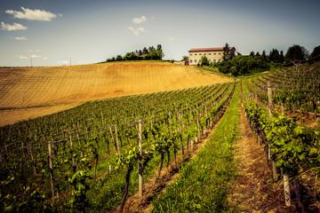 Vigne del Monferrato