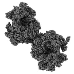 Eukaryotic ribosome (80S, from Baker's yeast).