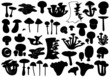 Set of different mushrooms - 52520559