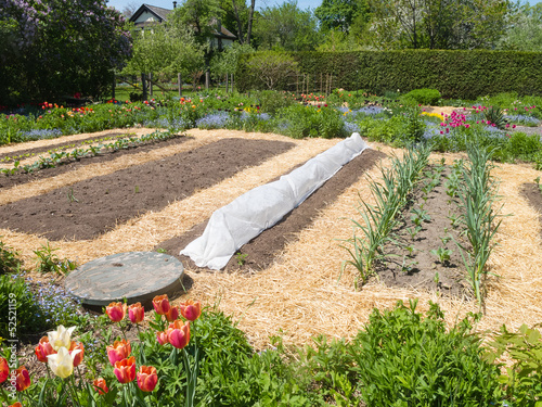 Vegetable Garden with straw mulch