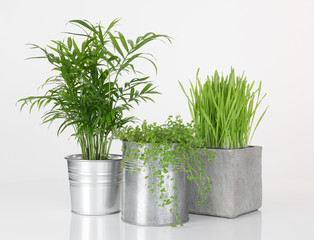 Beautiful plants in metal pots