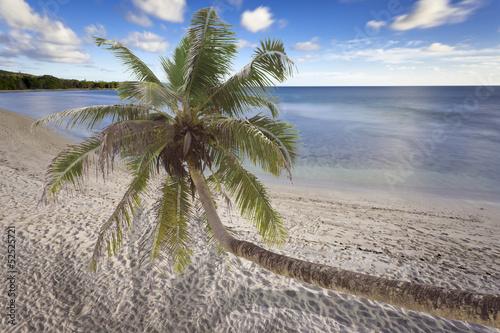 Fototapeten,seychelles,strand,coconut palm,sand