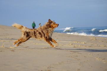chien courant sur la plage