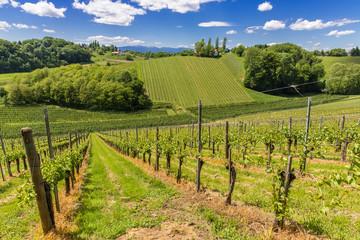 Weingärten, Südsteiermark