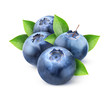 isolated blueberries. Four fresh blueberry fruits with leaves isolated on white background