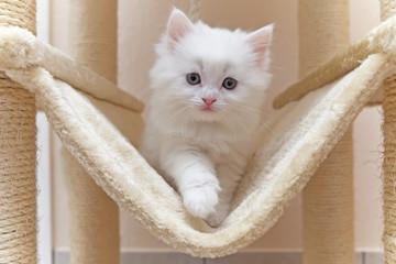 Katze, Kätzchen, Katzenhaus, Kratzbaum