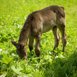 Cute foal on a summer pastur