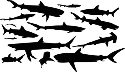 isolated shark silhouettes collection