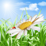 Ladybird on daisy flower vector