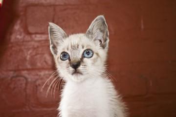 gato soneca02