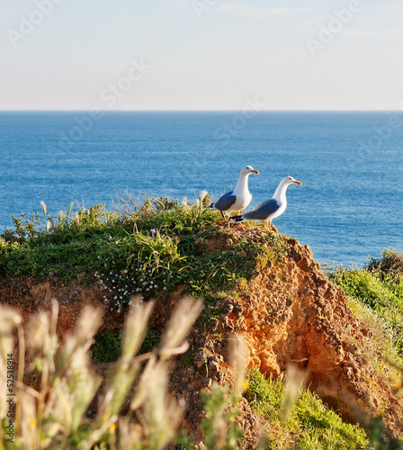 Two seagulls on a rocky shore in the grass. Against the backdrop