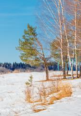 Landscape near Vitebsk