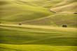 colline verdi,Toscana,Italia