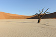 Tree with shadow in Deadvlei at sunset