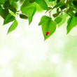 Beautiful leaves background