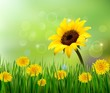 Summer background with yellow flowers and grass. Vector.
